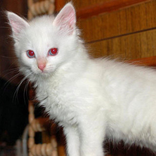 albino-cats-kittens-05.jpg