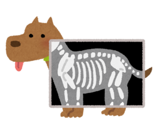 pet_xray_dog.png